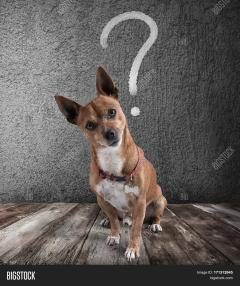 question dog